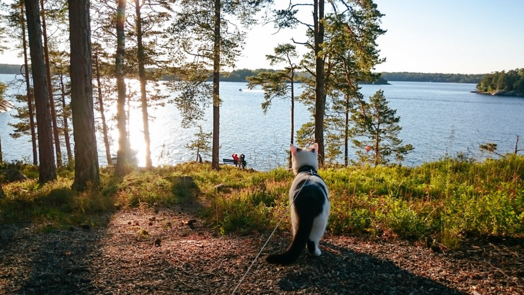 cat looking at lake