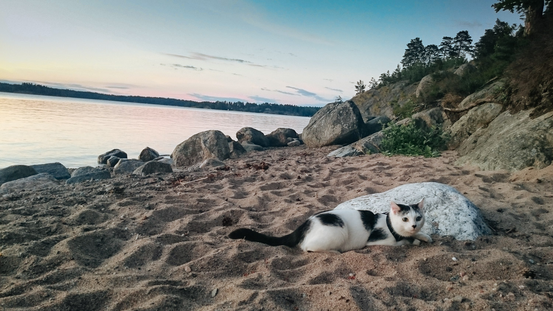 adventurecat-yuki (45 of 118)