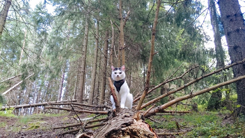 adventurecat-yuki (61 of 118)
