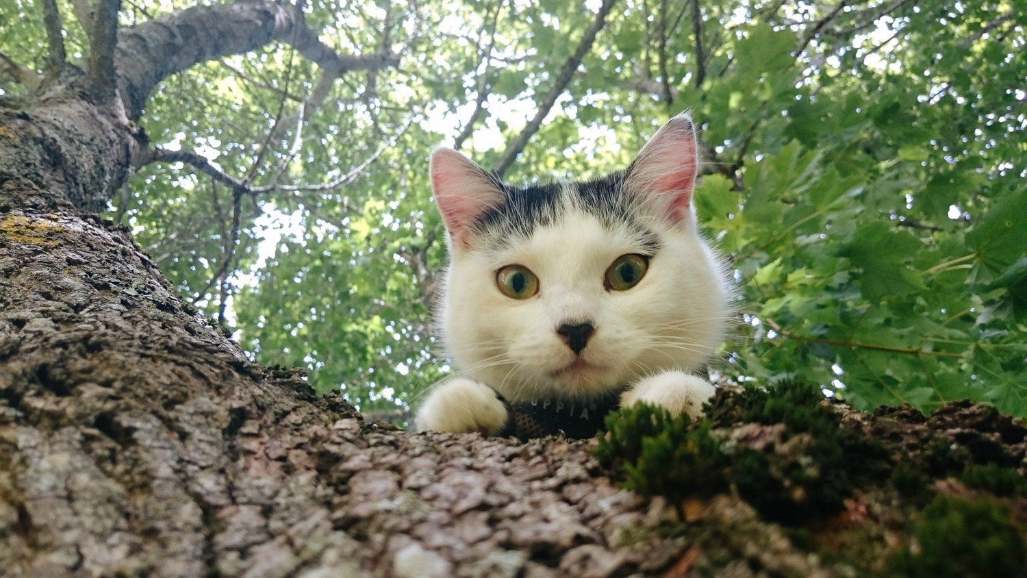 cat looking down from tree