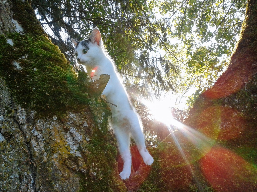 kitten climbing in mossy tree