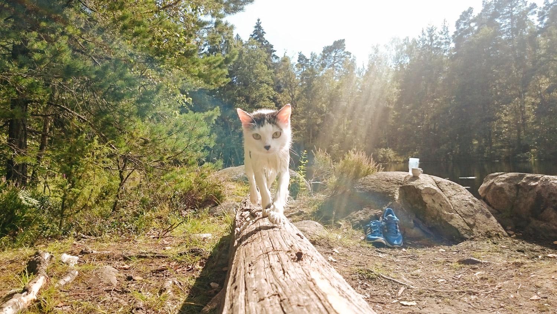 wet cat on log