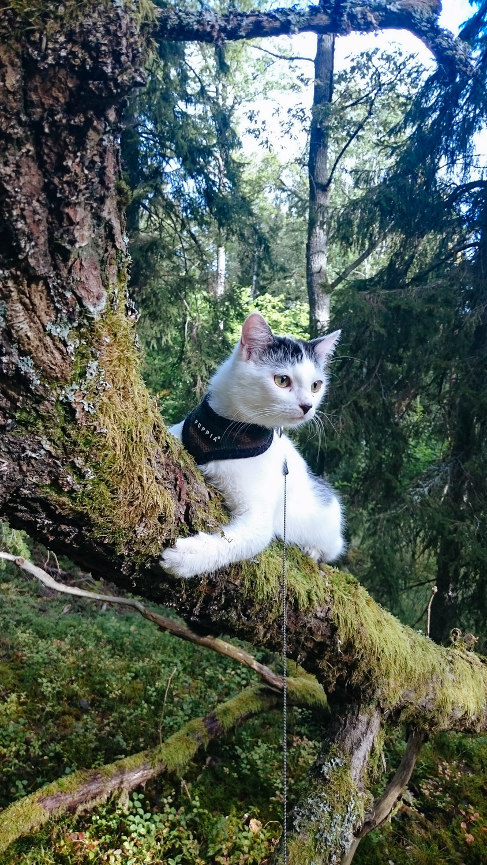 cat sitting in mossy tree