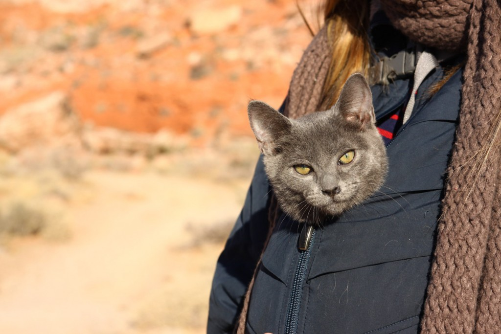 cat zipped into coat