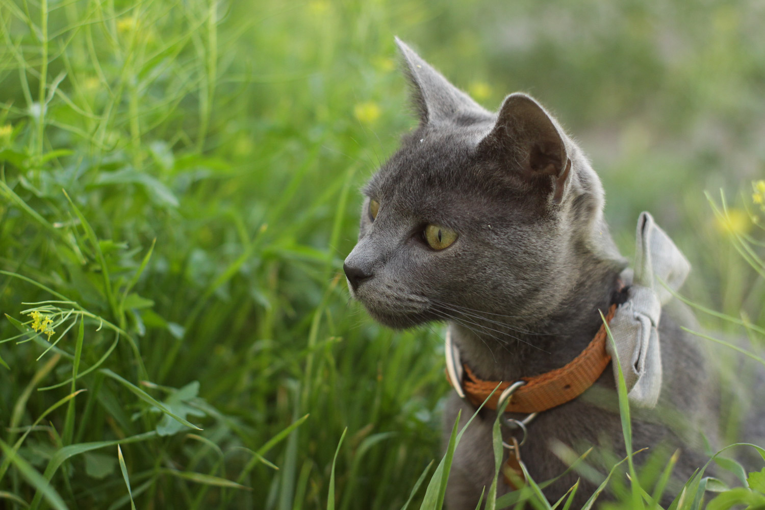 gray cat in grass