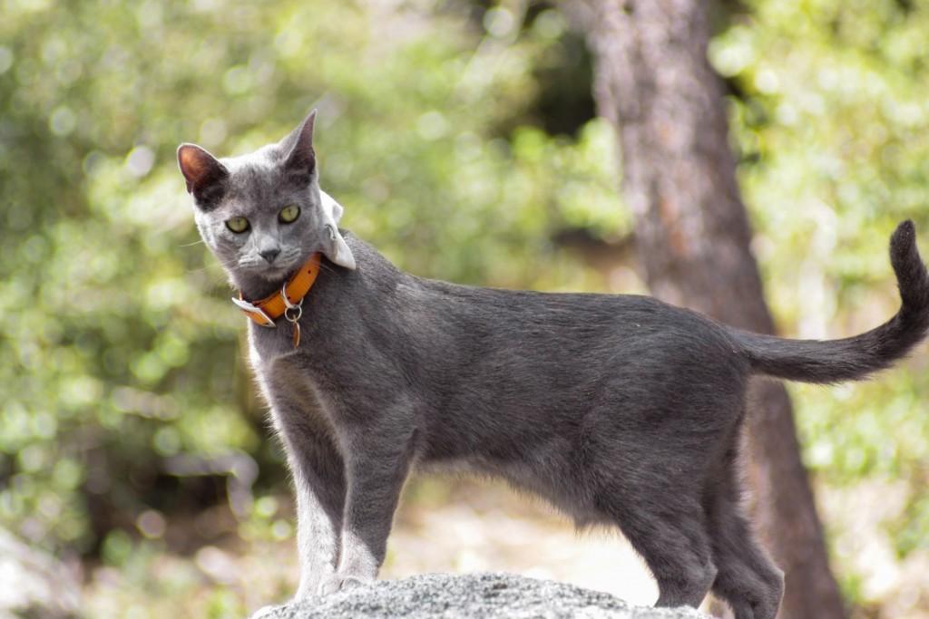 adventurecats-shade (21 of 32)