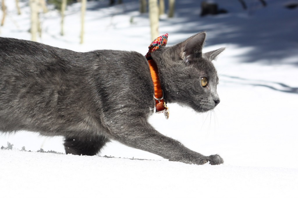 Shade the cat in snow