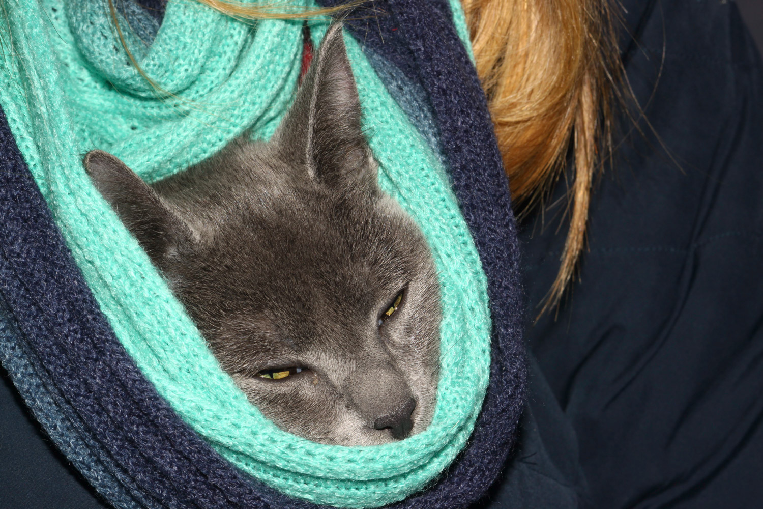 cat snuggled in scarf