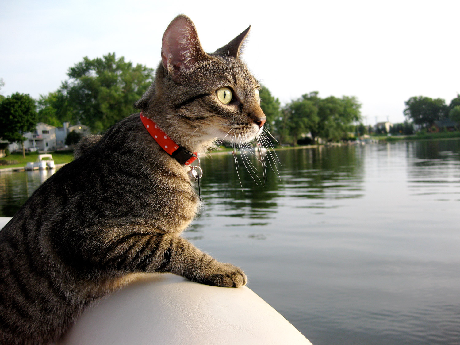 cat looking out over water