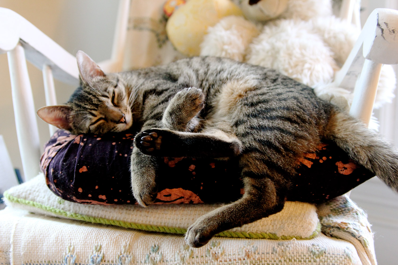 alaska-adventure-cat (2 of 46)