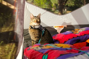 Emma Deans the cat in a tent