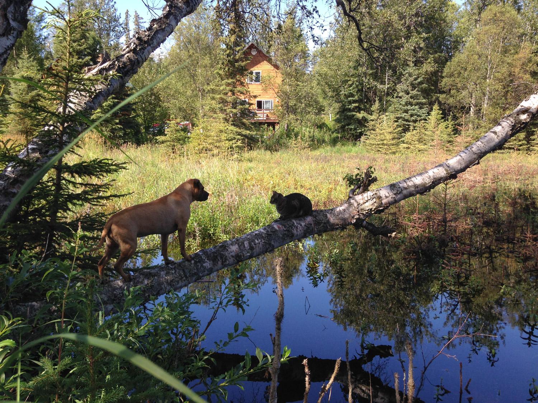 alaska-adventure-cat (42 of 46)