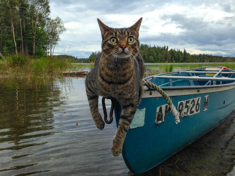 cat in canoe