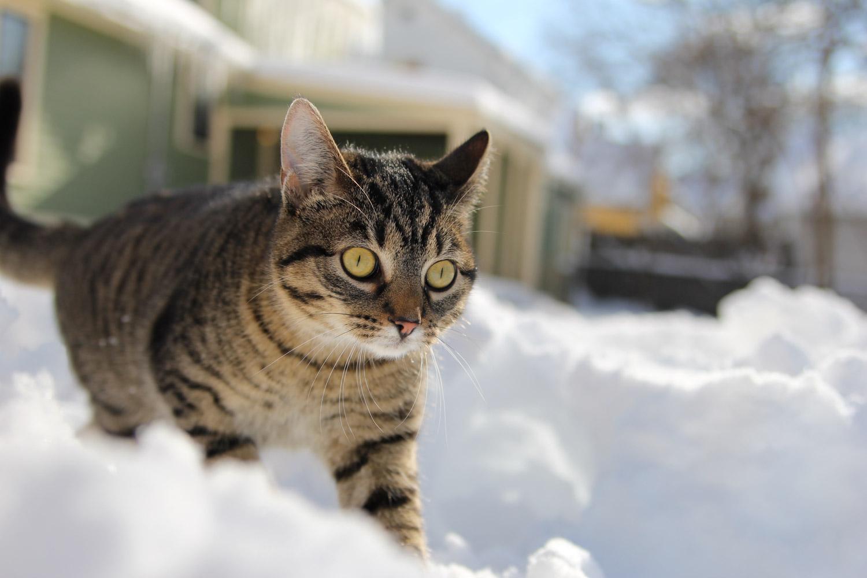 alaska-adventure-cat (5 of 46)