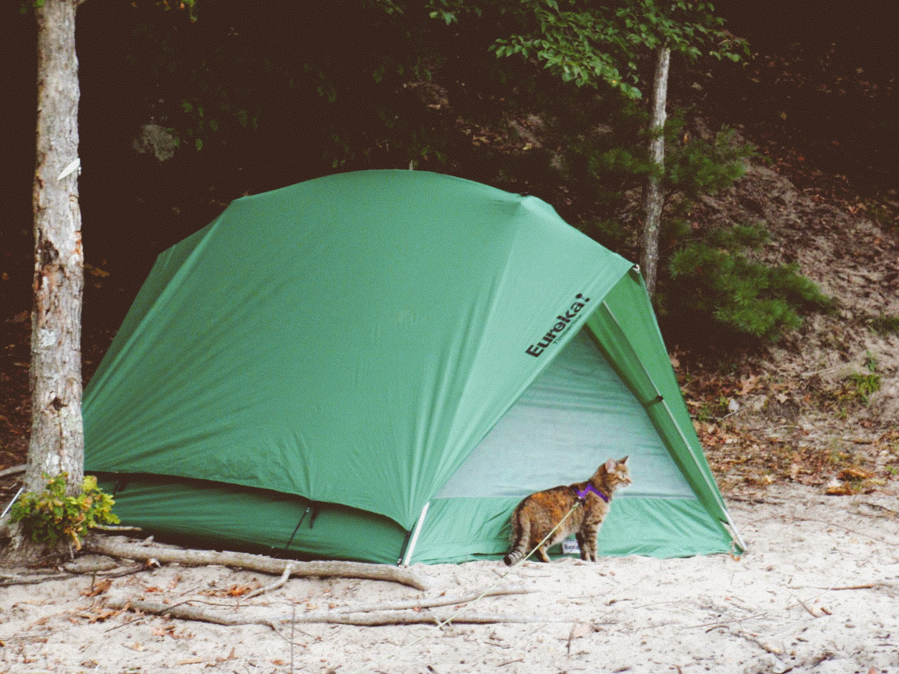 Perhaps one of Josie the cat's favorite activities is exploring a newly set-up campsite. (Photo: Erin Dush)