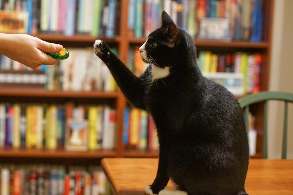 clicker training a cat