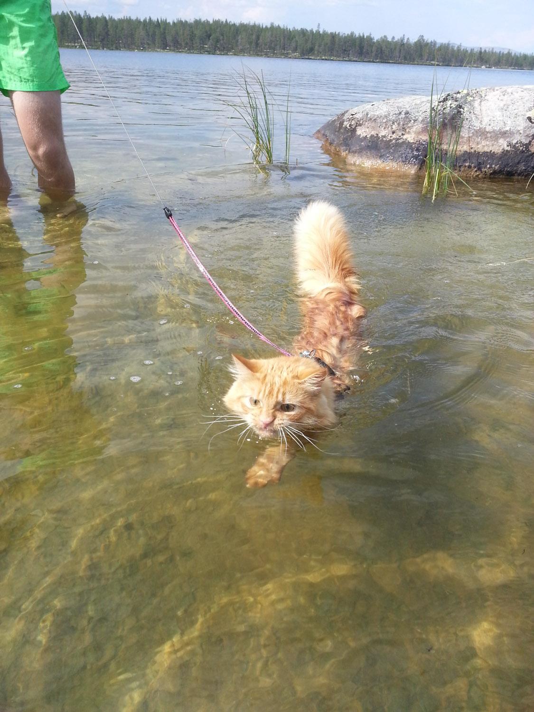 Jesper Adventure Cats (4 of 9)