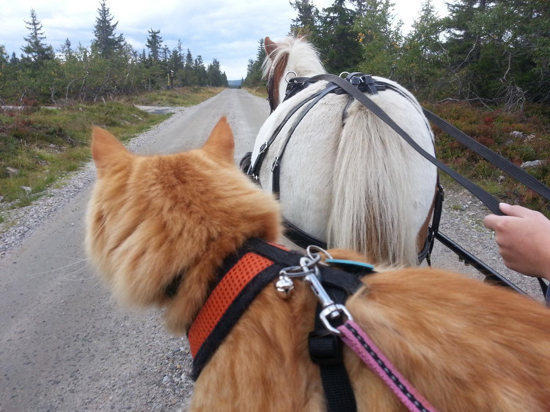Jesper Adventure Cats (7 of 9)