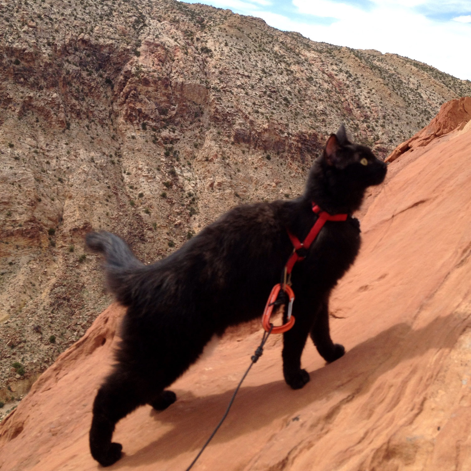 Craig Armstrong frequently takes his cat, Millie, climbing in Utah.