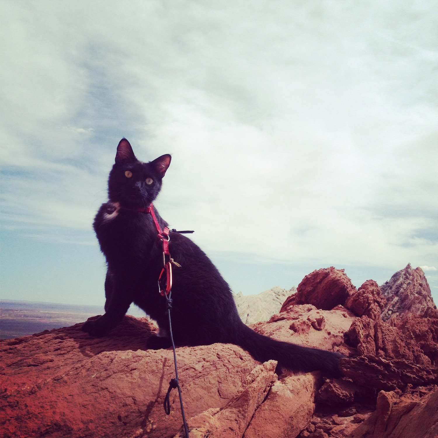 cat climbed a mountain