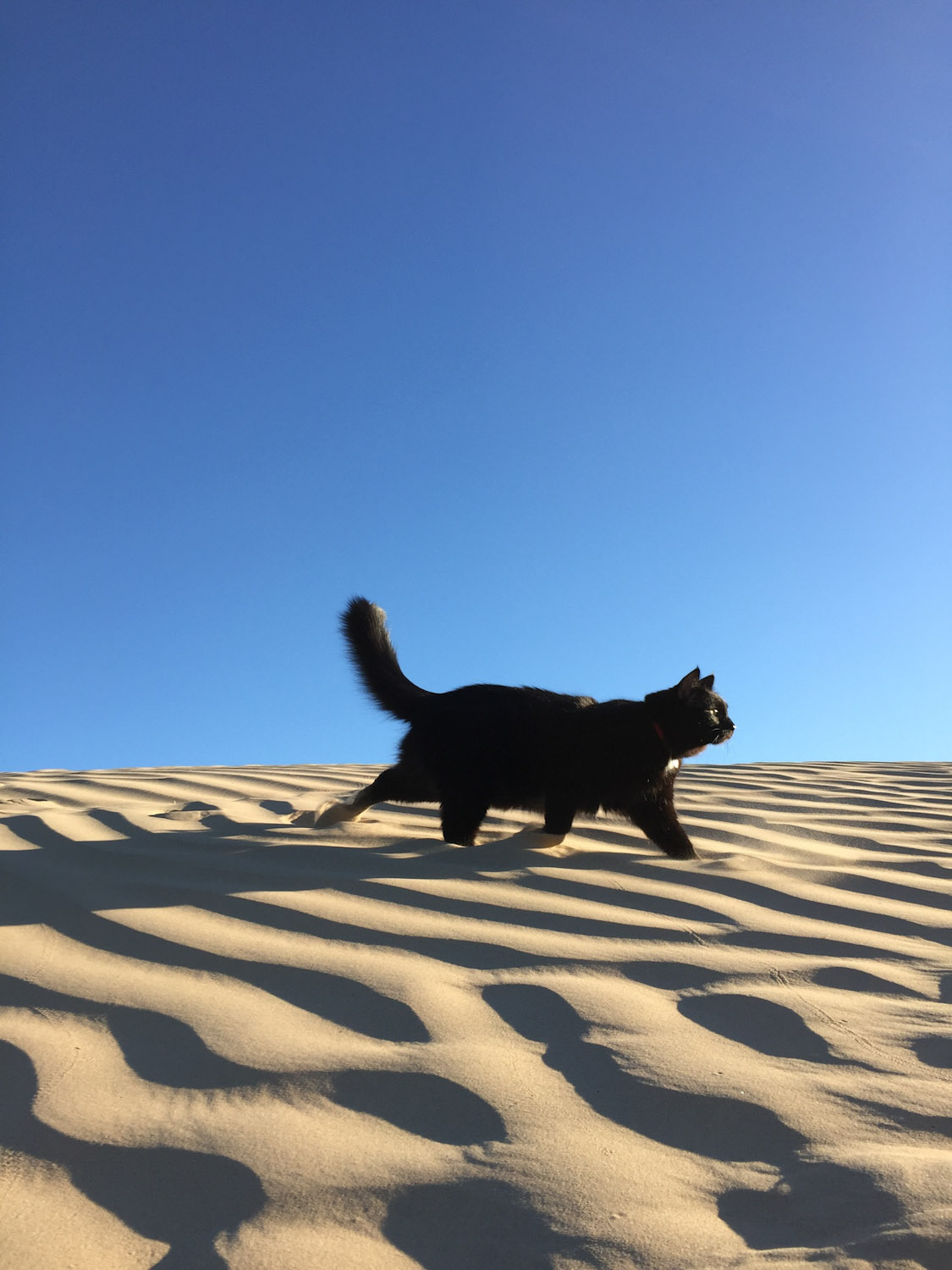 Millie walks through desert