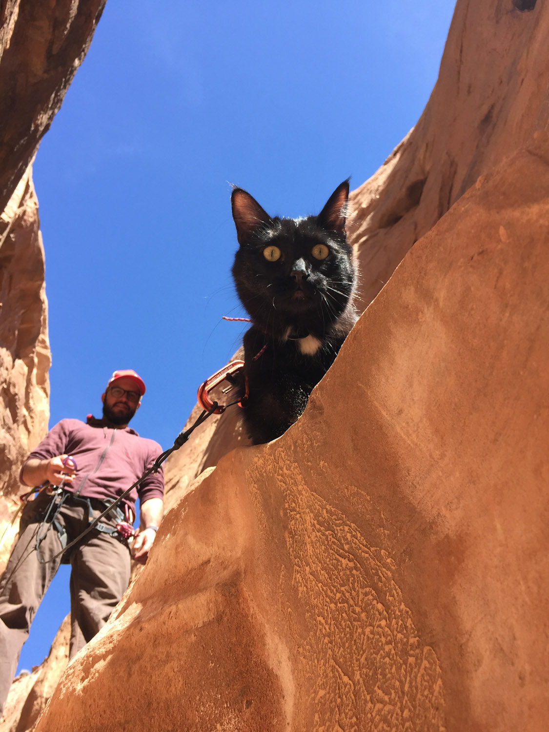 cat looks into slot canyon