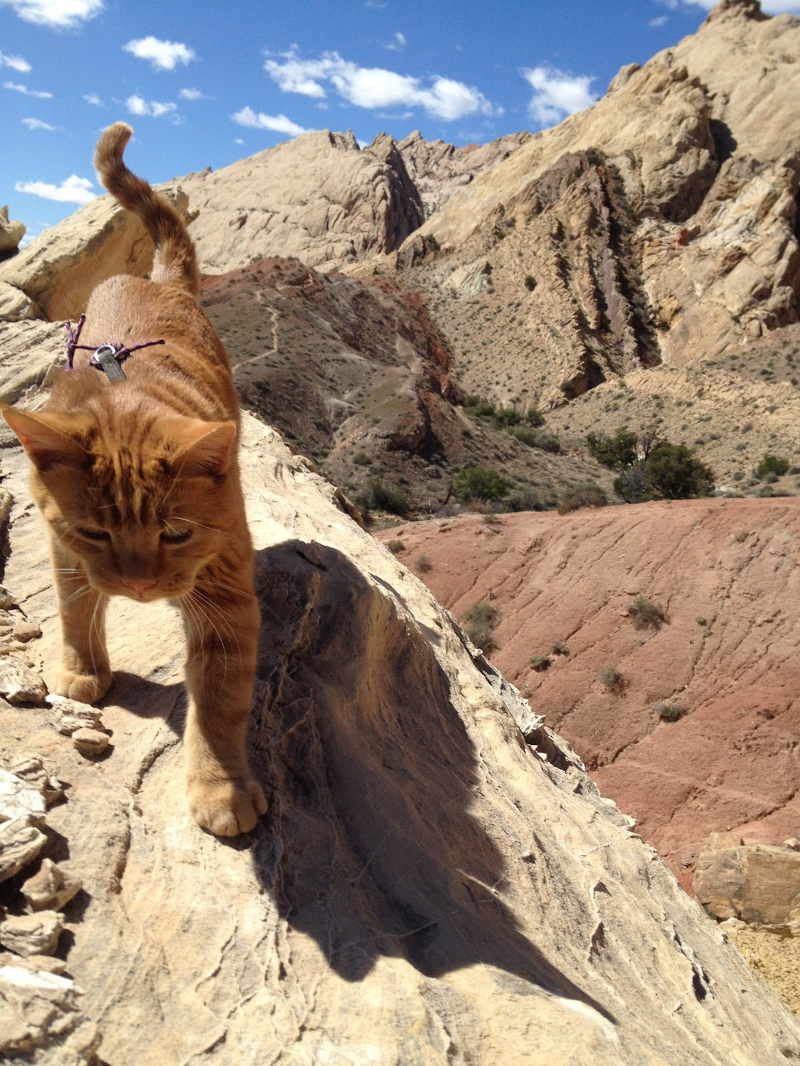 Kenneth the cat climbing in Utah