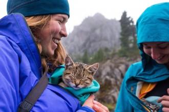 cuddling kittens on a hike