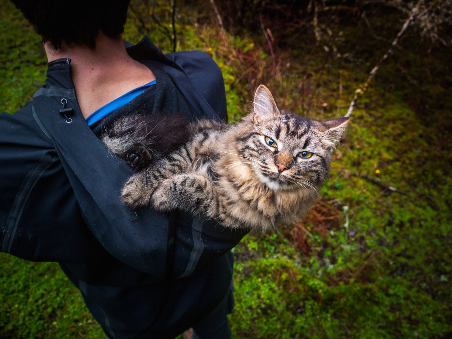 cat on person's shoulders