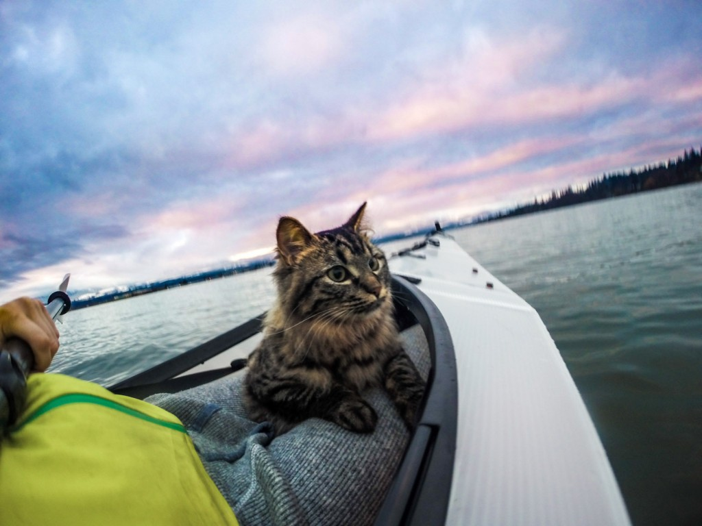 cat riding in kayak