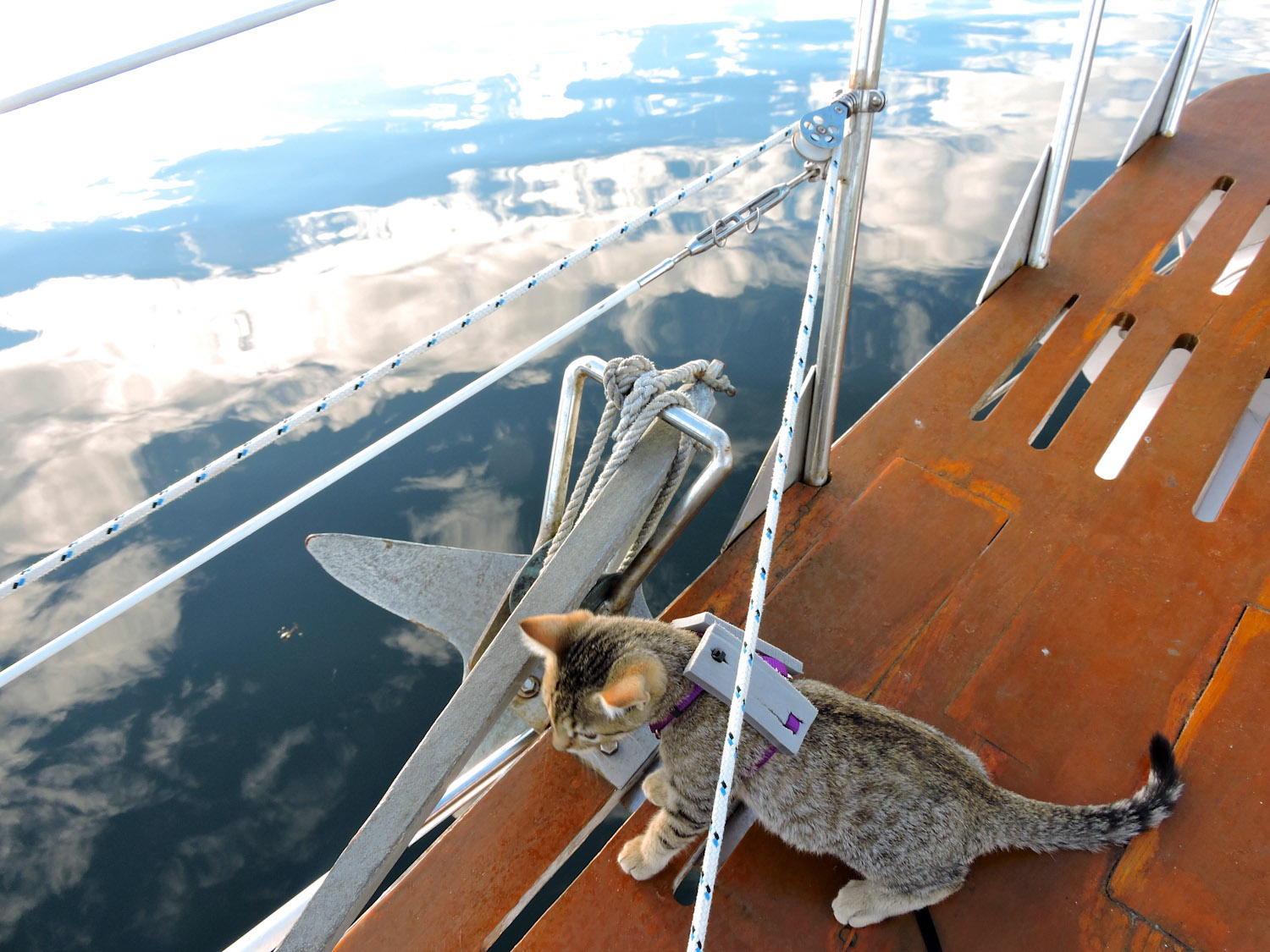 cat on sailboat