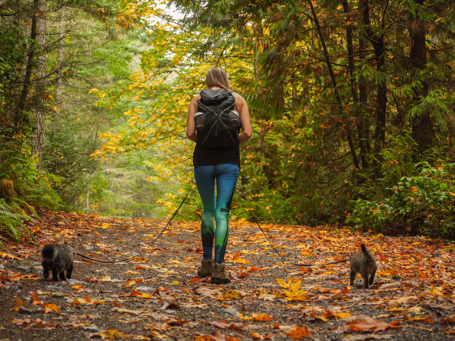 hiking with kittens