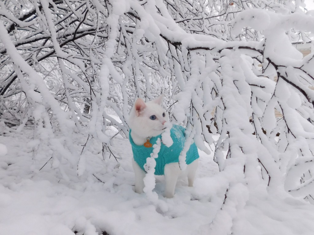 Casper the cat in snow
