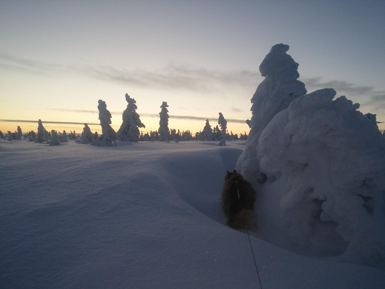Jesper cat in Norway snow