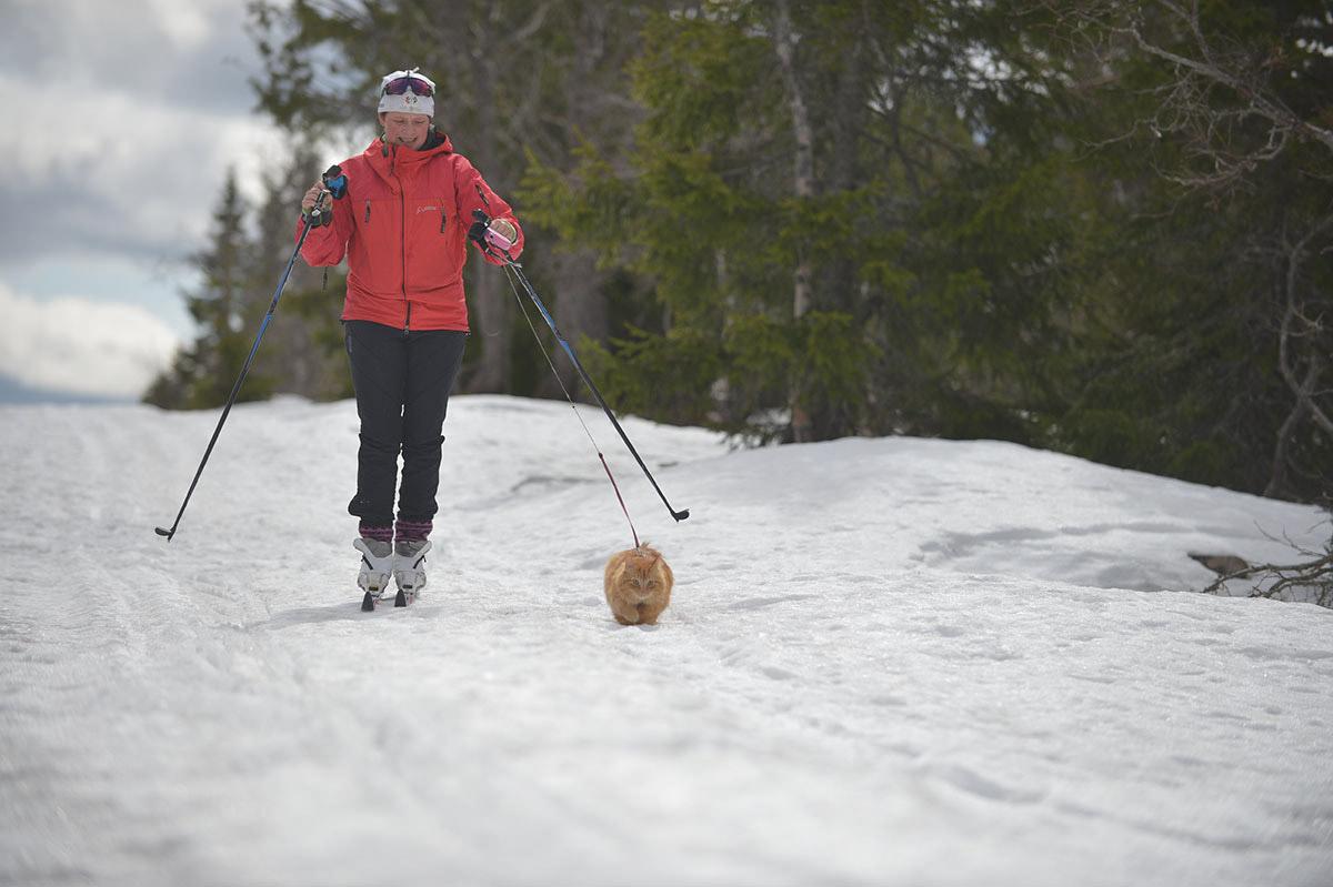 Jesper cat skiing in Norway
