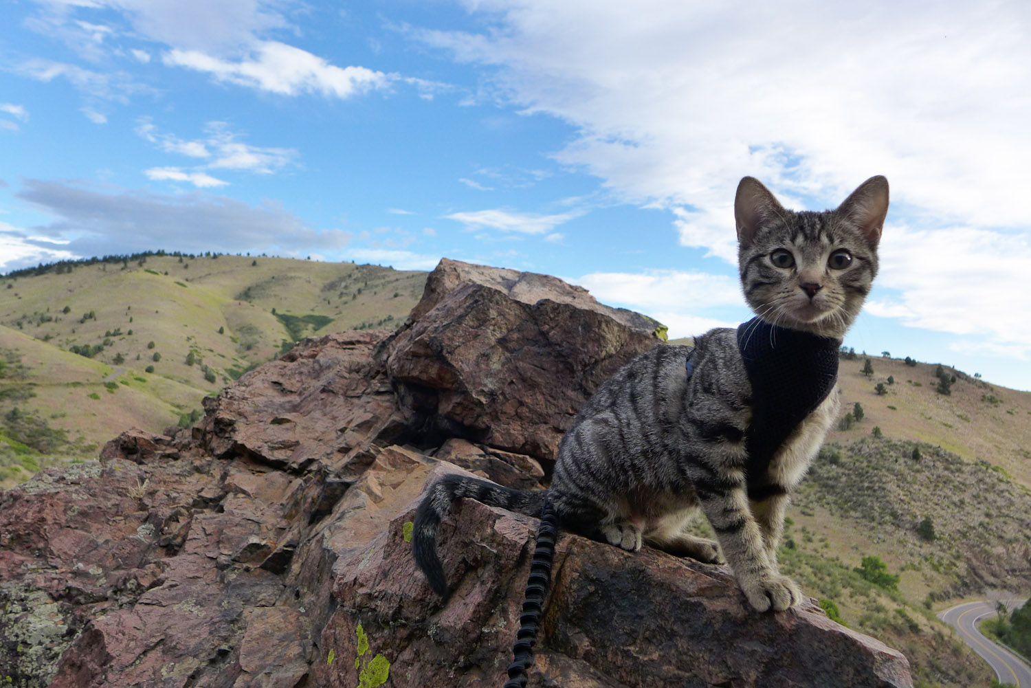 Waffles the adventure cat (10 of 30)