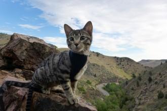 Waffles the adventure cat