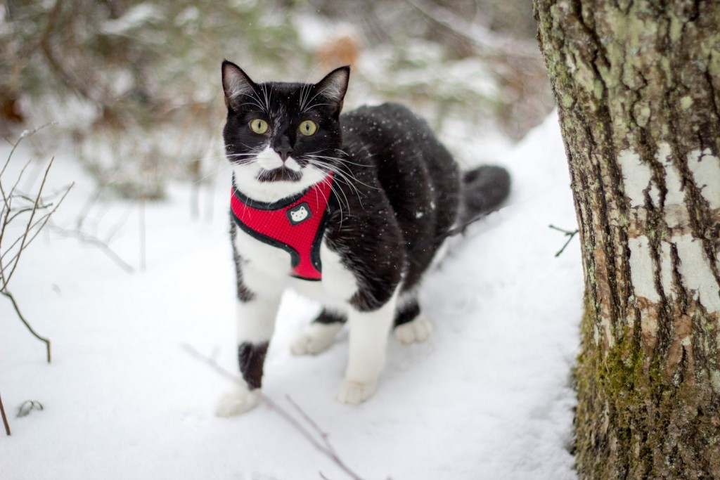 kitty walking in snow