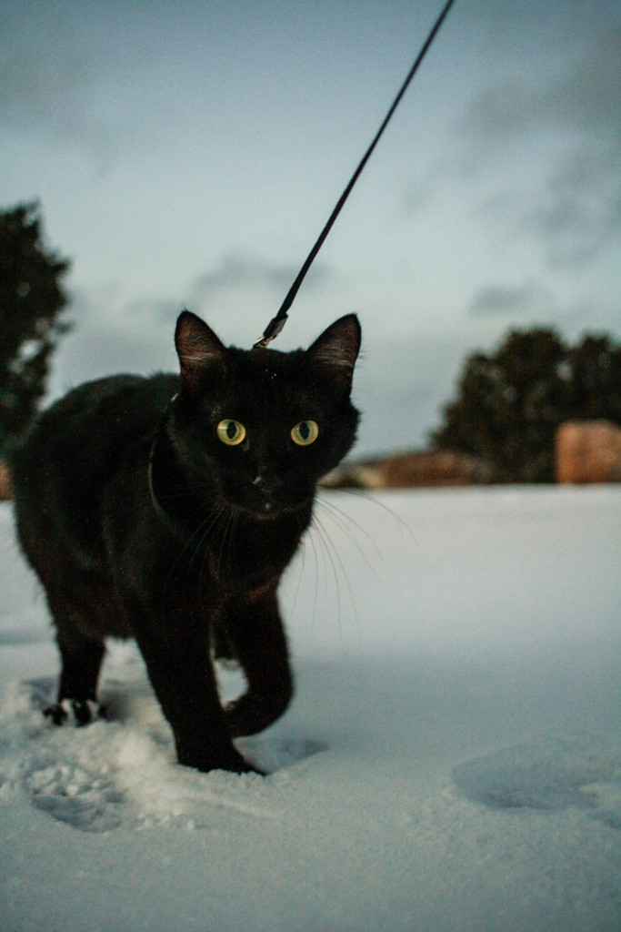 black cat hiking in snow