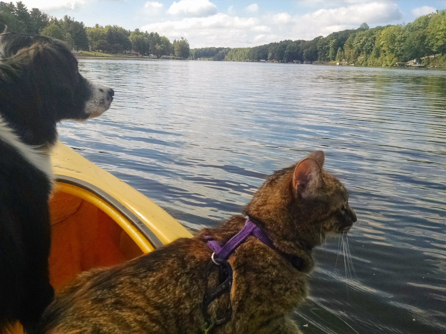 Josie the cat and her best friend, Mazie the dog, love to adventure together. (Photo: Erin Dush)