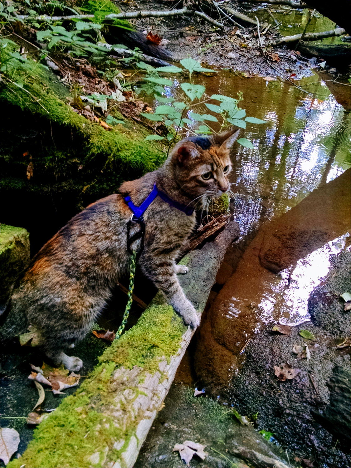 Josie is an Adventure Cat to the core. (Photo: Erin Dush)