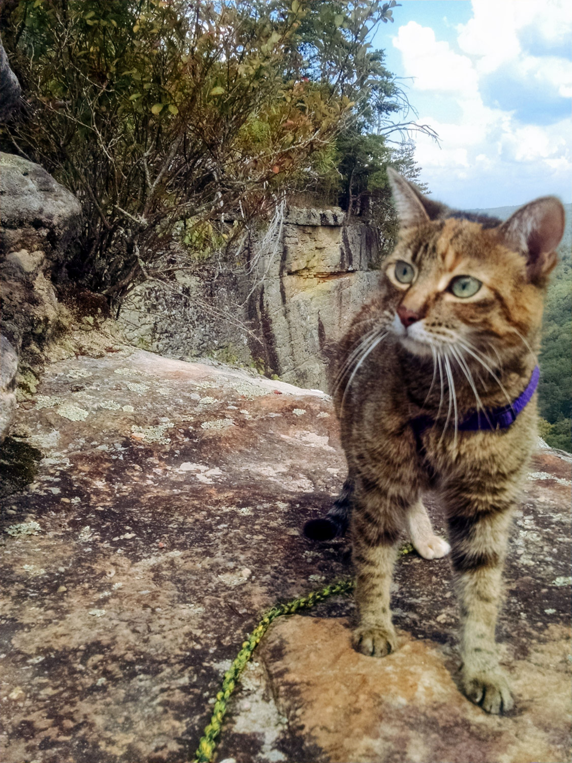 Not only is Josie a true adventurer, she is totally adorable, too! (Photo: Erin Dush)