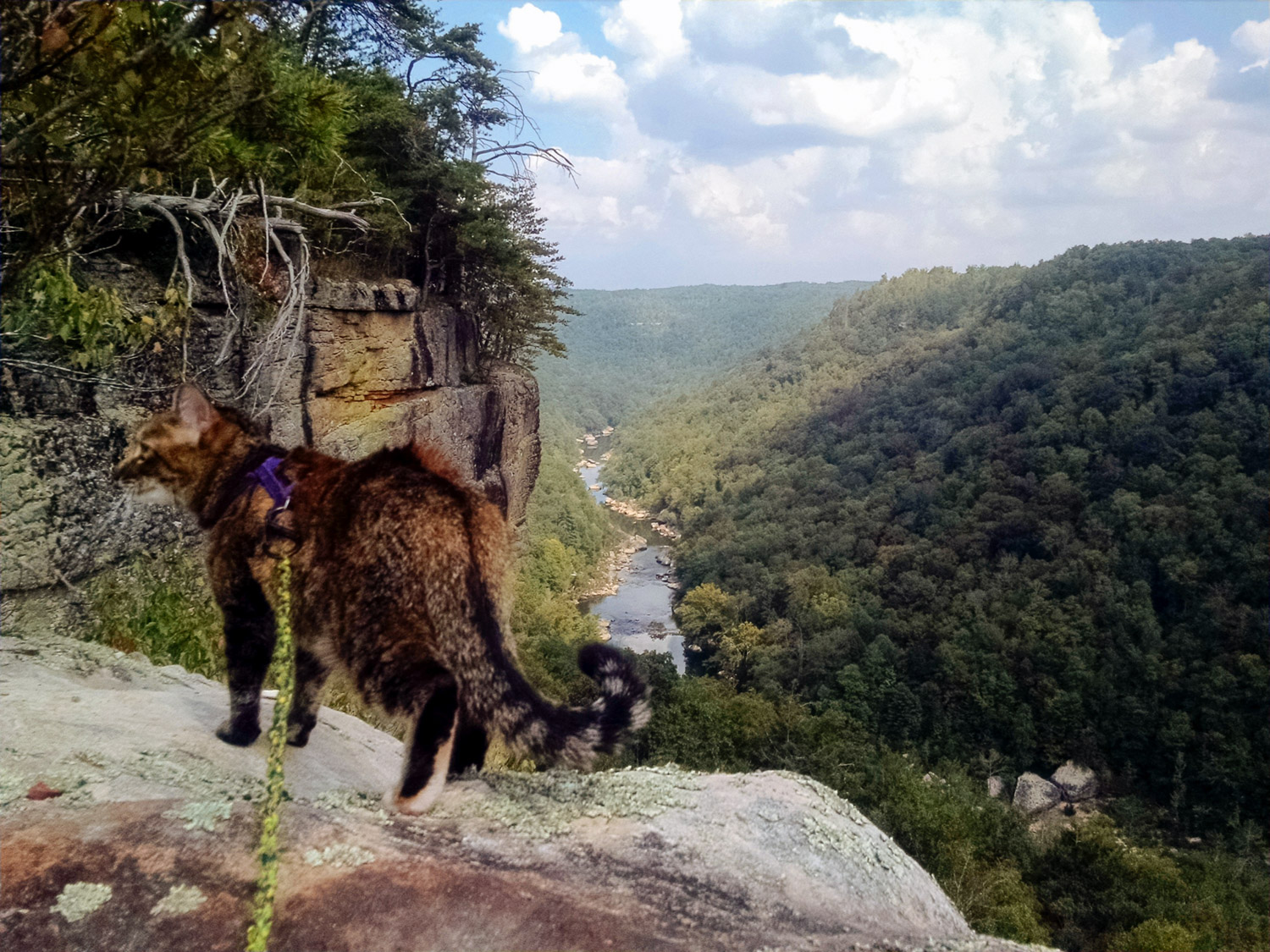 Sometimes Josie has to stop and take in the view, but her human Erin doesn't mind one bit. (Photo: Erin Dush)