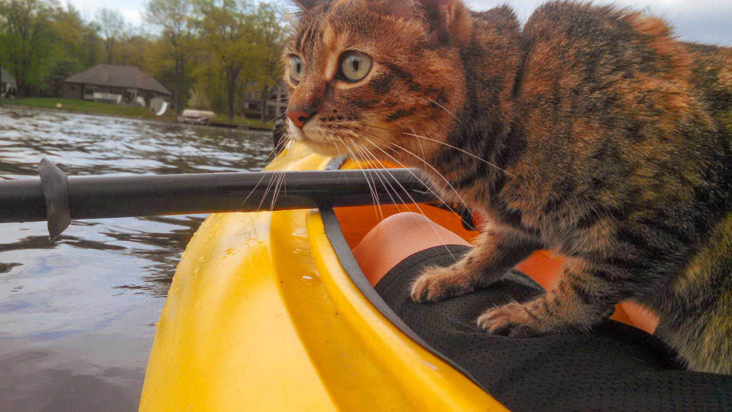 'She seems to really enjoy kayaking and even has accompanied me paddle boarding several times this past summer,' Dush says of Josie. (Photo: Erin Dush)