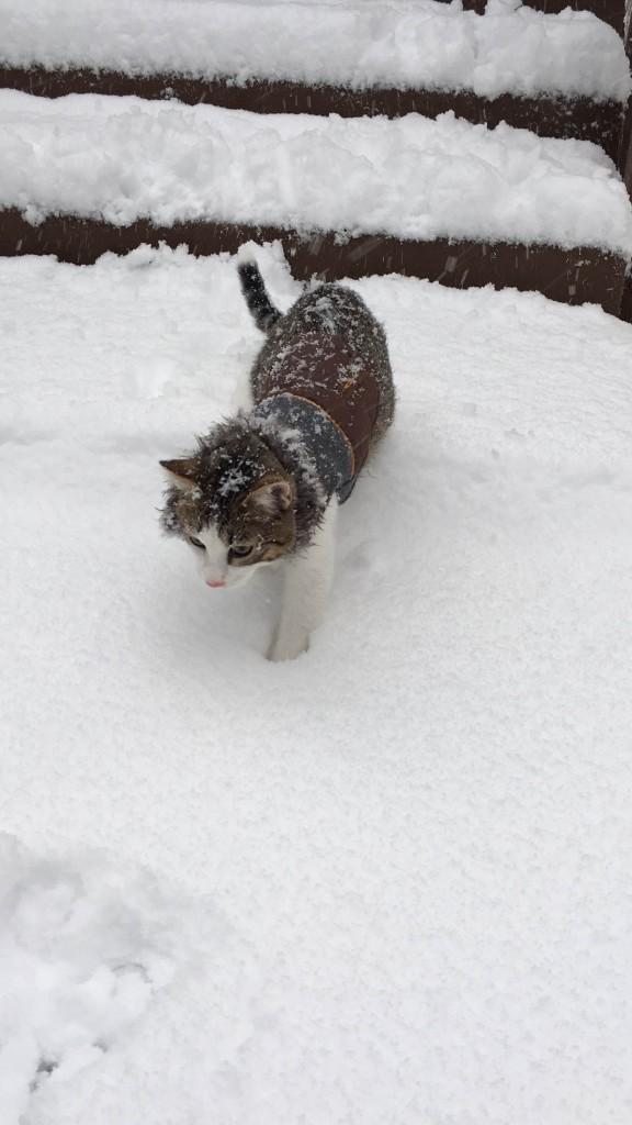 Mowgli the cat in snow
