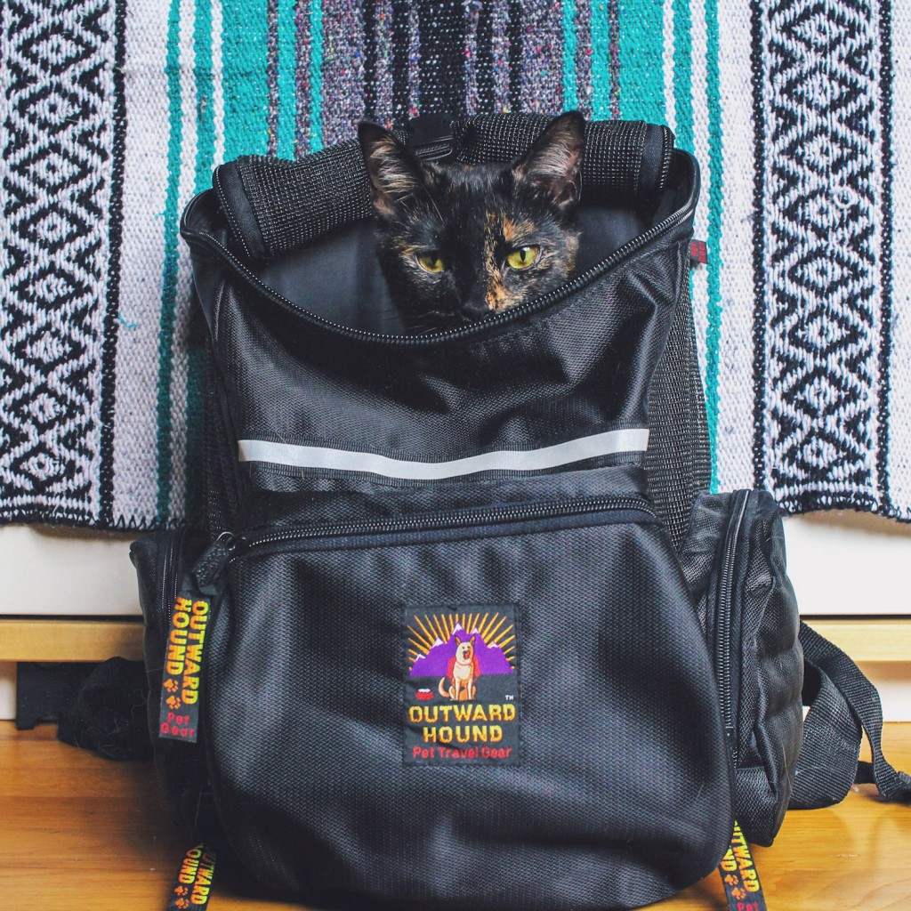 tortie cat in backpack