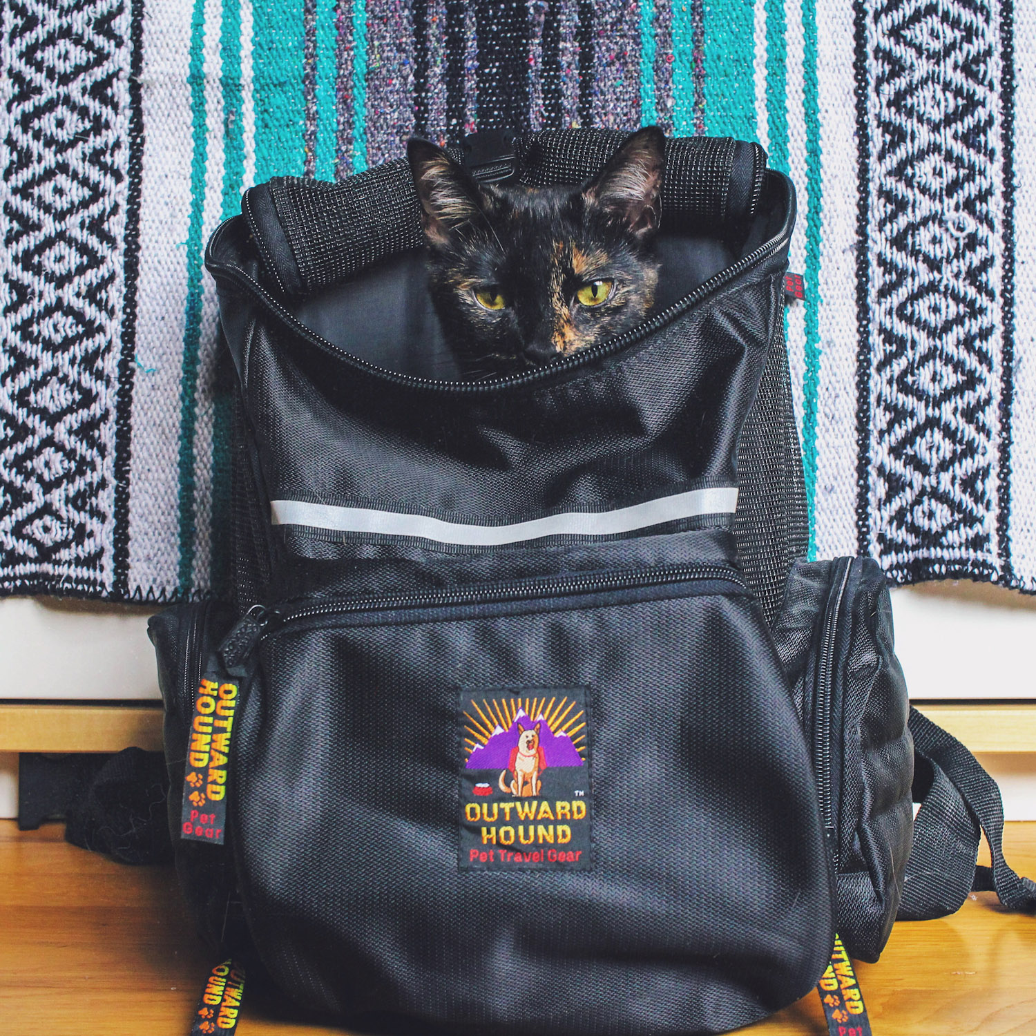 What backpacks are best for cats? – Adventure Cats