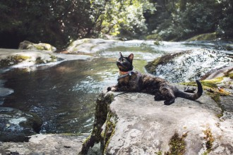cat relaxing beside river