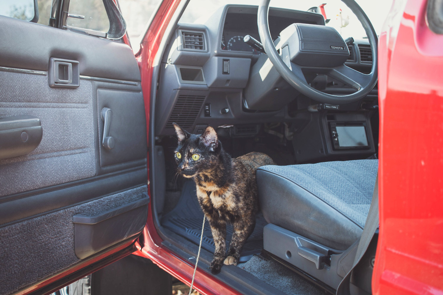 cat in pickup truck