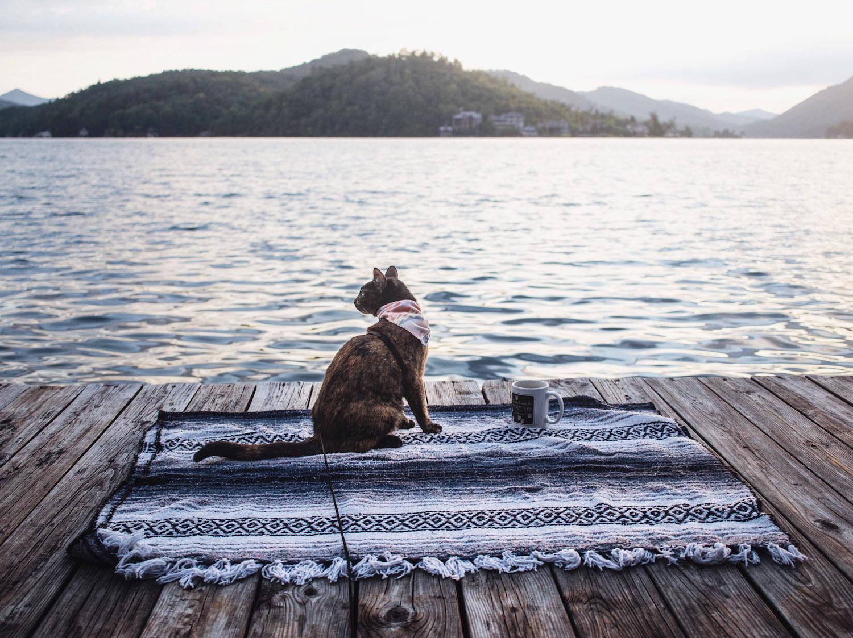 cat on blanket beside lake